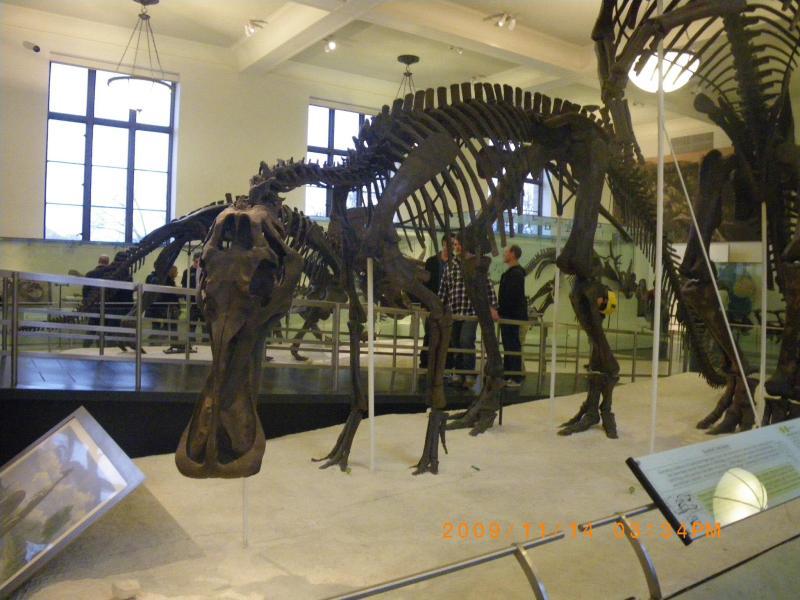 恐竜の化石2 名前を忘れてしまった…