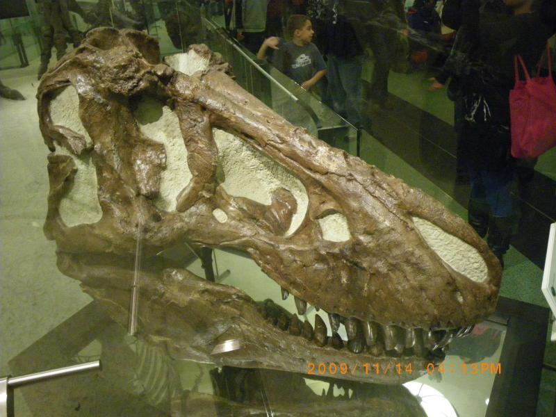 ティラノサウルスの頭部の化石