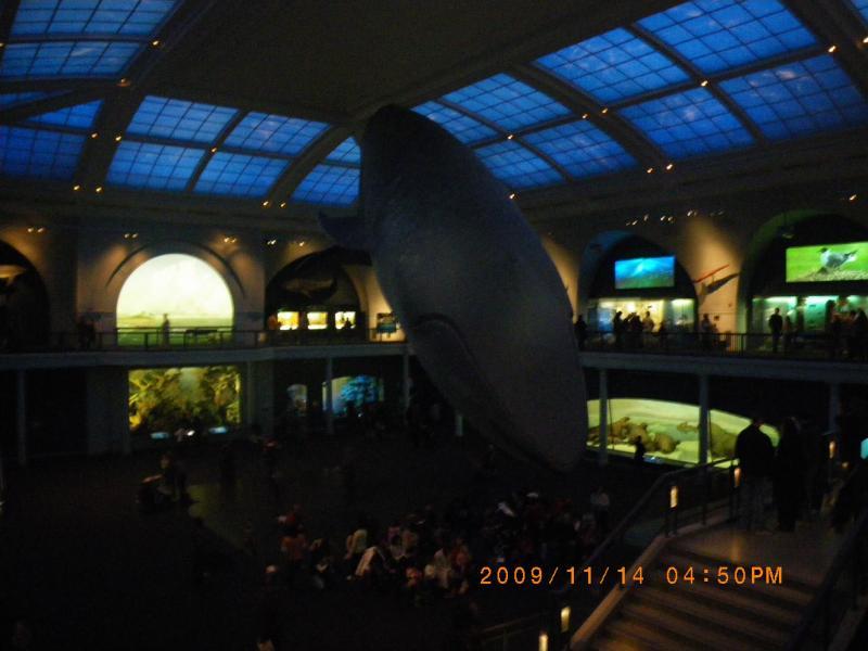 シロナガスクジラ、全長27.4m。大きい。