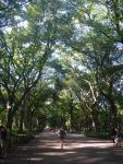7月の哲学の道。この時期がNew Yorkは最も美しい時期だと思います。